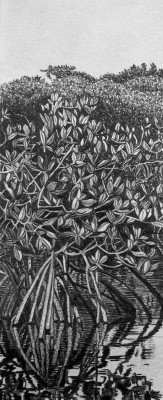 detail of drawing by K Smith